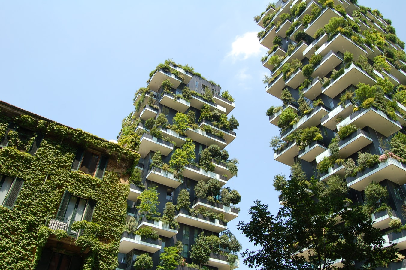 Two residential towers covered with trees