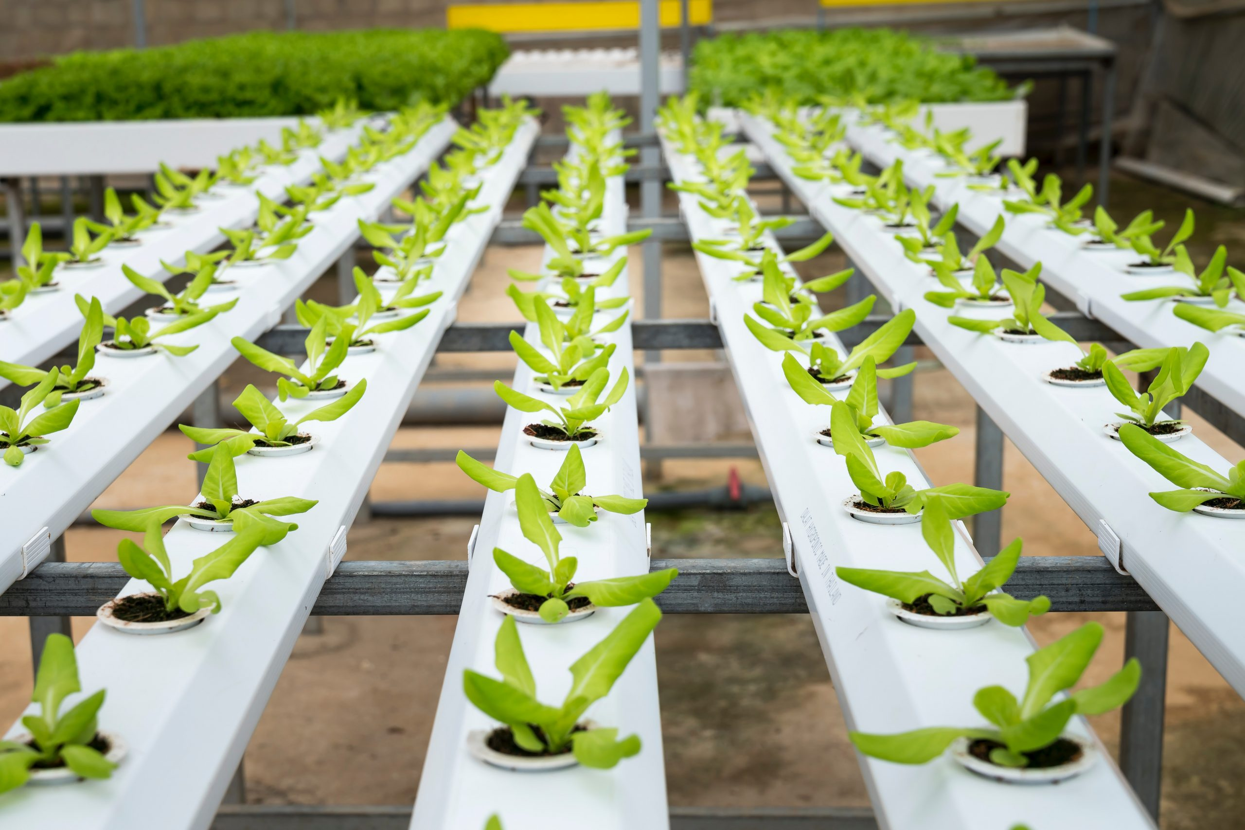 saplings inside farming
